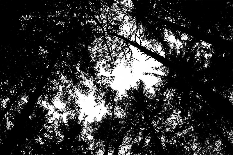 Nature_10